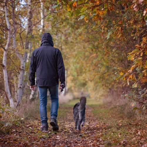 favourite Northampton dog walks